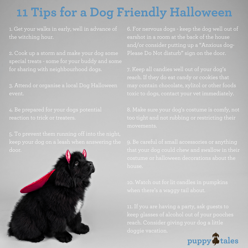 11 Tips for a Dog Friendly Halloween
