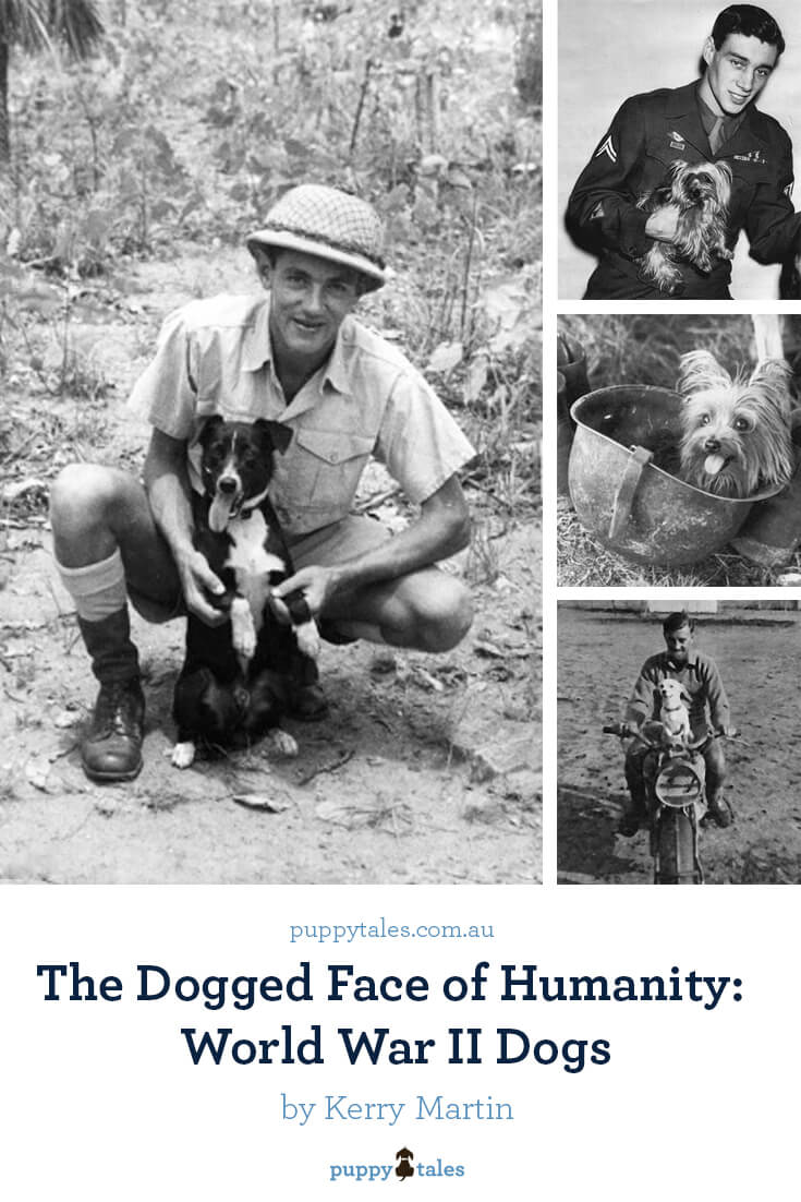 The Dogged Face of Humanity: World War II Dogs