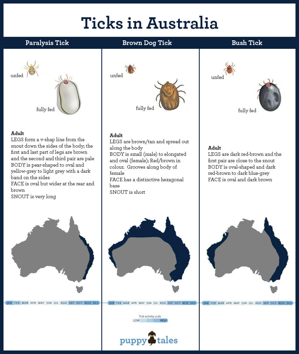 Ticks in Australia, identification and areas found