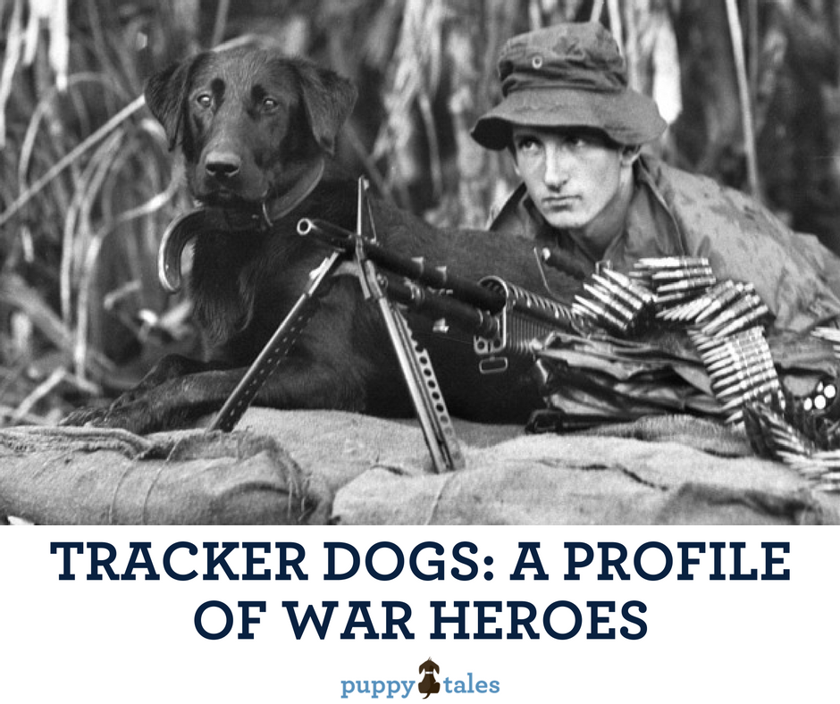 Australian Tracker dogs of the Vietnam War