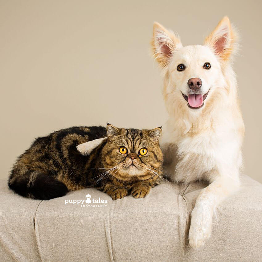 Dogs and cats can be great buddies