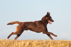 Puppy Tales Photo Challenge ~ Running Dog