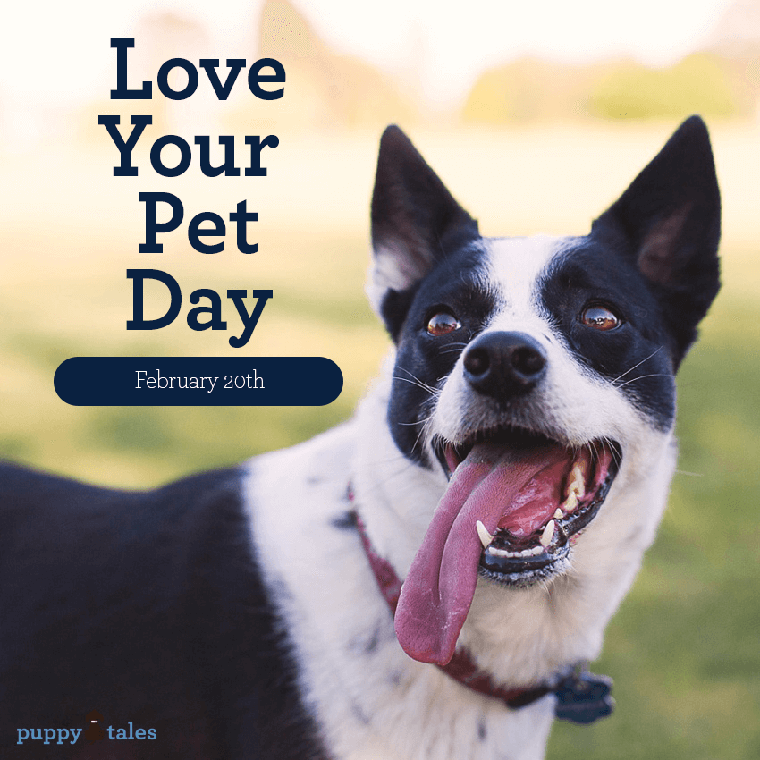Love your Pet Day. Love is about more than toys, tasty treats, and a fancy bed – love means putting your dog's needs first. So this 'Love Your Pet Day', instead of buying your dog a new toy, do something different. Why not walk a mile in your pet's paws?
