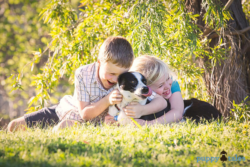 Love Your Pet Day. Does your dog have everything essential to leading a happy and fulfilled life?