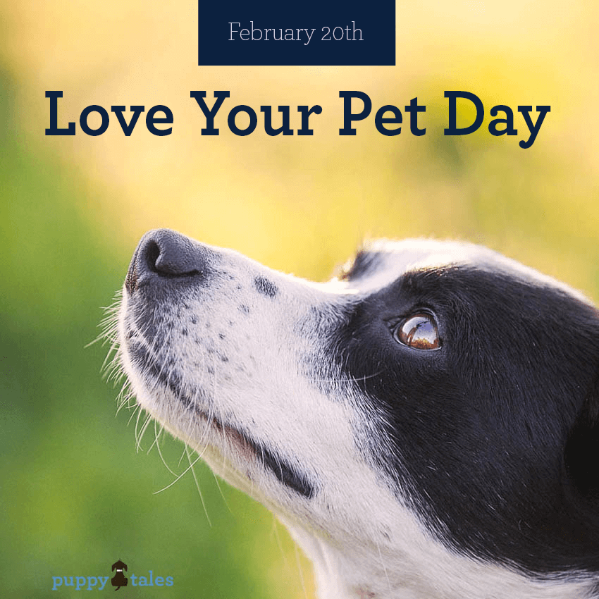 Love Your Pet Day.  Have you truly thought about what 'love' means to your dog?