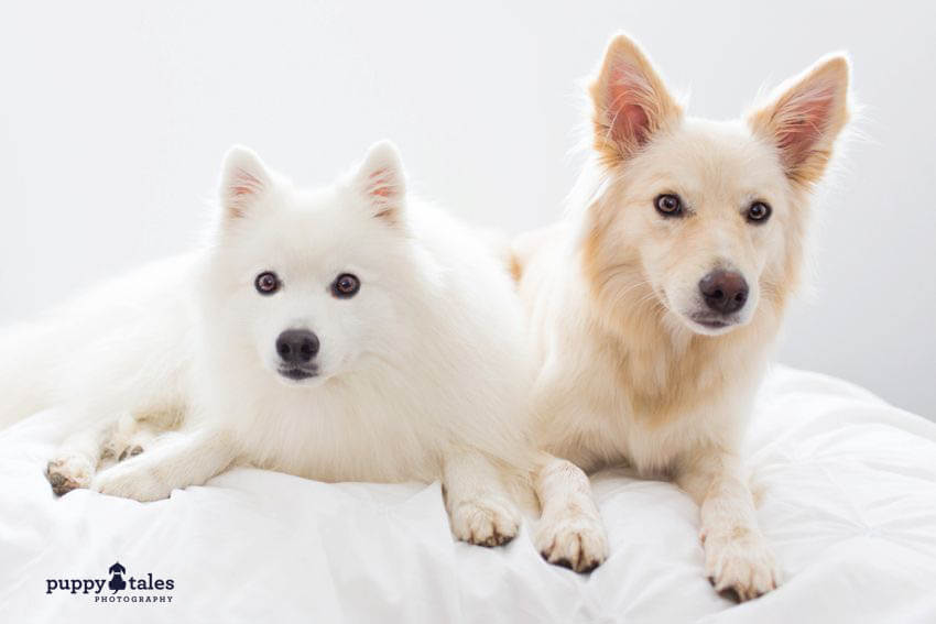 Cute dogs posing on the couch