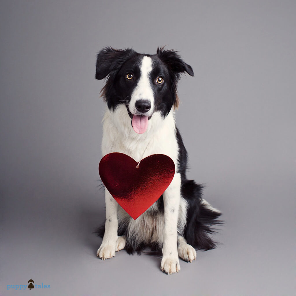 Rosie the Border Collie wants to wish you love