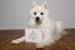akemi-photography-christmas-card-preview-1