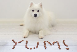 Christmas Gift Guide for Dogs ~ Nom Nom Nom