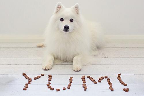 Christmas Gift Guide for Dogs ~ Nom Nom Nom