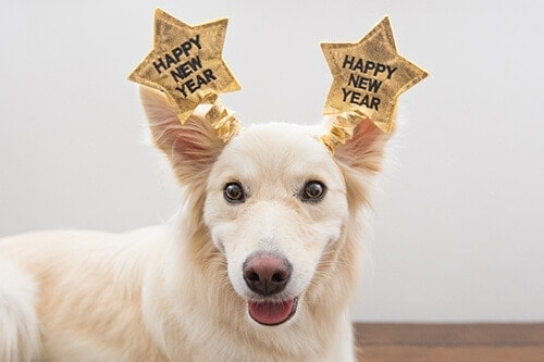 Puppy Tales Photo Challenge ~ Happy New Year