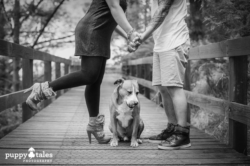 """A dog makes for a great """"canine cupid"""". For those dog owners who are currently single, a dog has a knack of making you meet new people. And for those in a relationship, a dog provides a common interest that strengthens and enriches your partnership."""