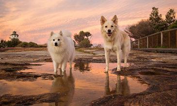 Puppy Tales Photo Challenge ~ Sunset