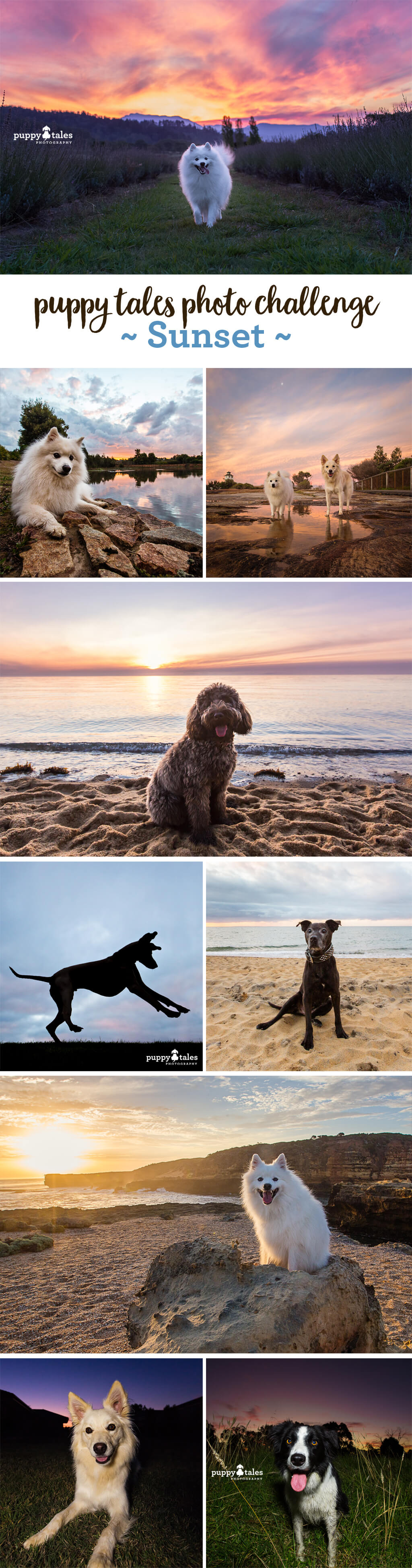 Puppy Tales Photo Challenge ~ Sunset