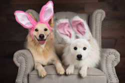Puppy Tales Photo Challenge ~ Easter Bunny