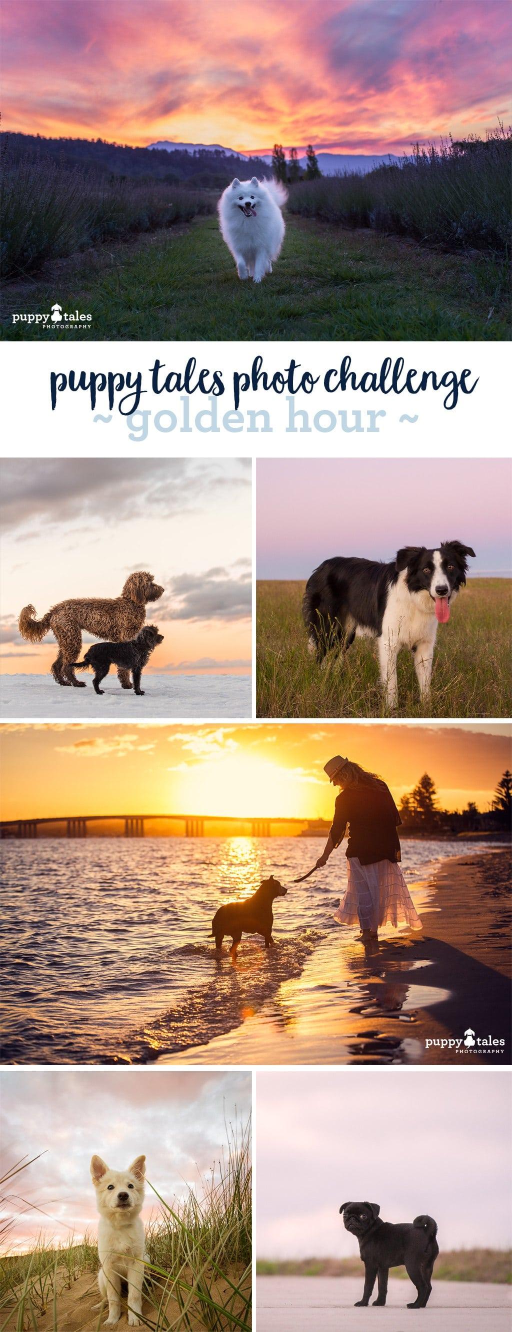 Puppy Tales Photo Challenge - Golden Hour
