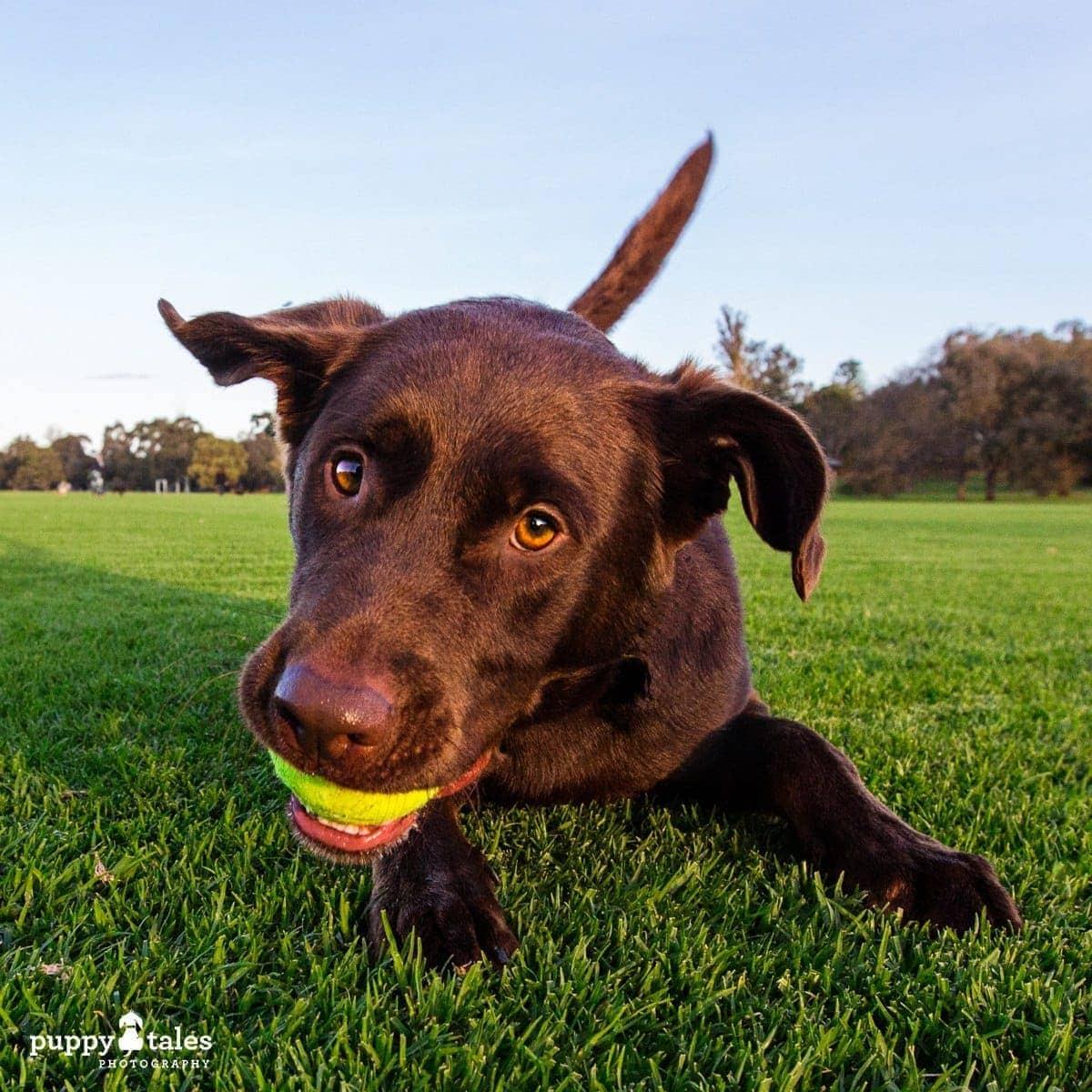 puppytalesphotography poochesatplaypromo 16 1