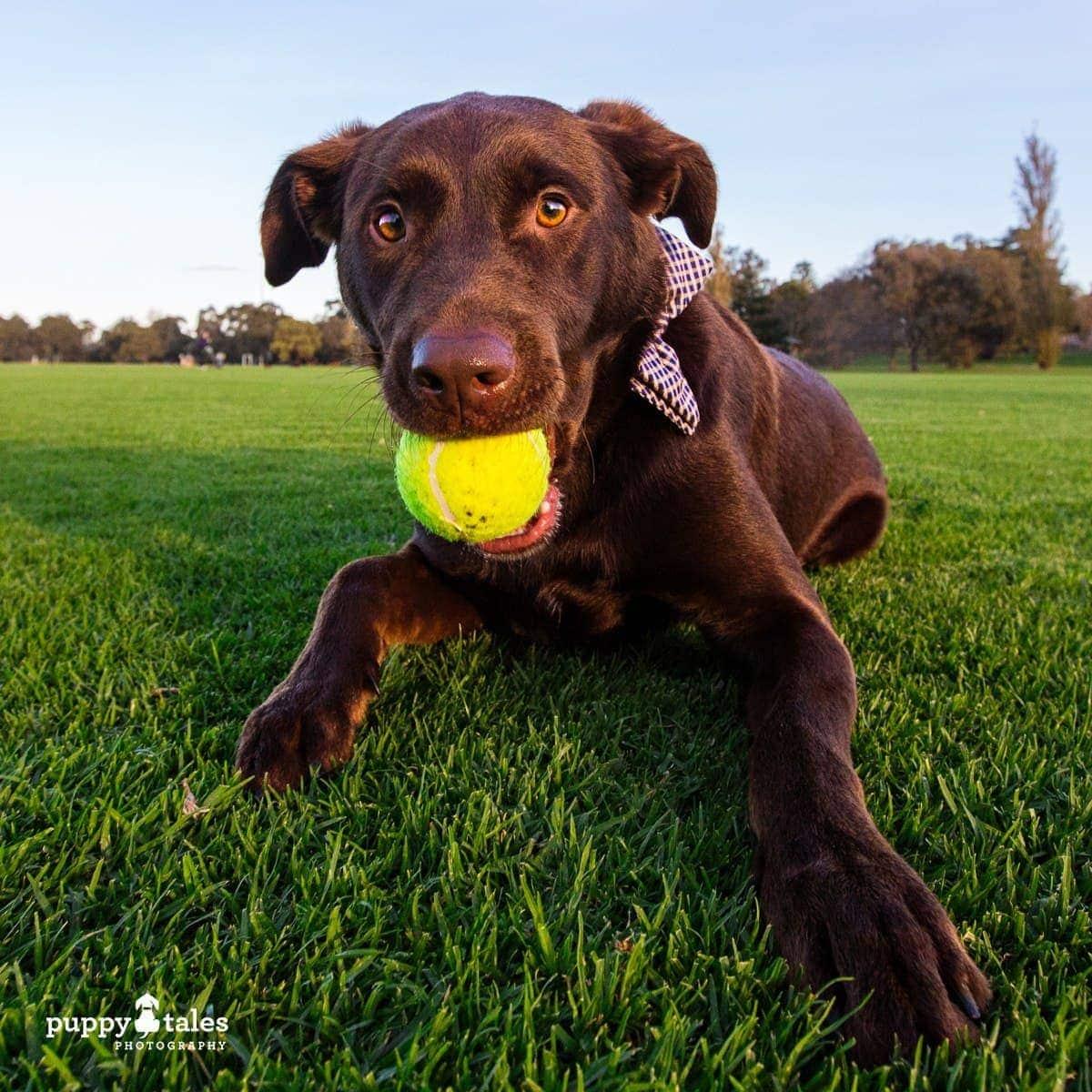 puppytalesphotography poochesatplaypromo 18 1