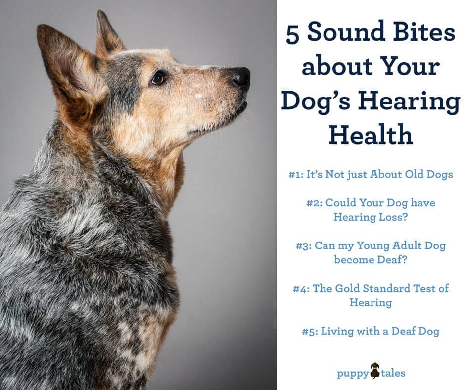 5 Sound Bites about Your Dog's Hearing Health