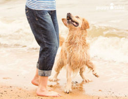 Visiting the beach with your dog.