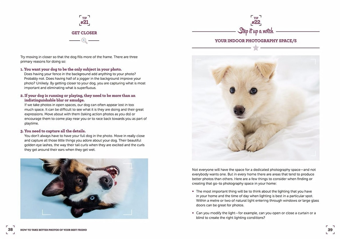 The 7 mistakes you make photographing your dog ebook infographic our ebook is an incredible 60 pages of guidance tips and gorgeous inspiring photos check out a little sneak peek of some of the pages fandeluxe PDF