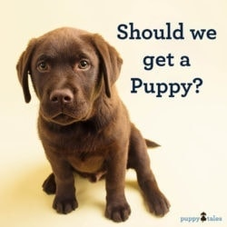 Should we get a puppy?