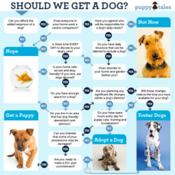 Should We Get a Dog Infographic