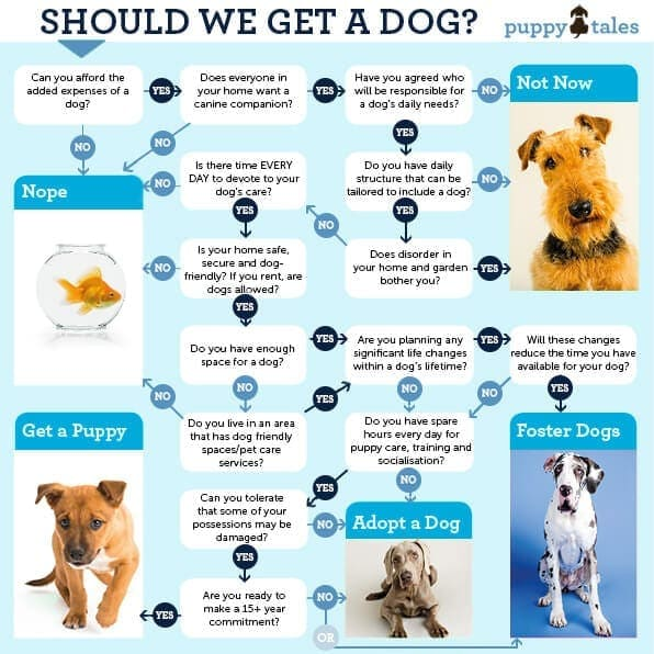 Is a Puppy Right for You? Finding the Right Dog for You