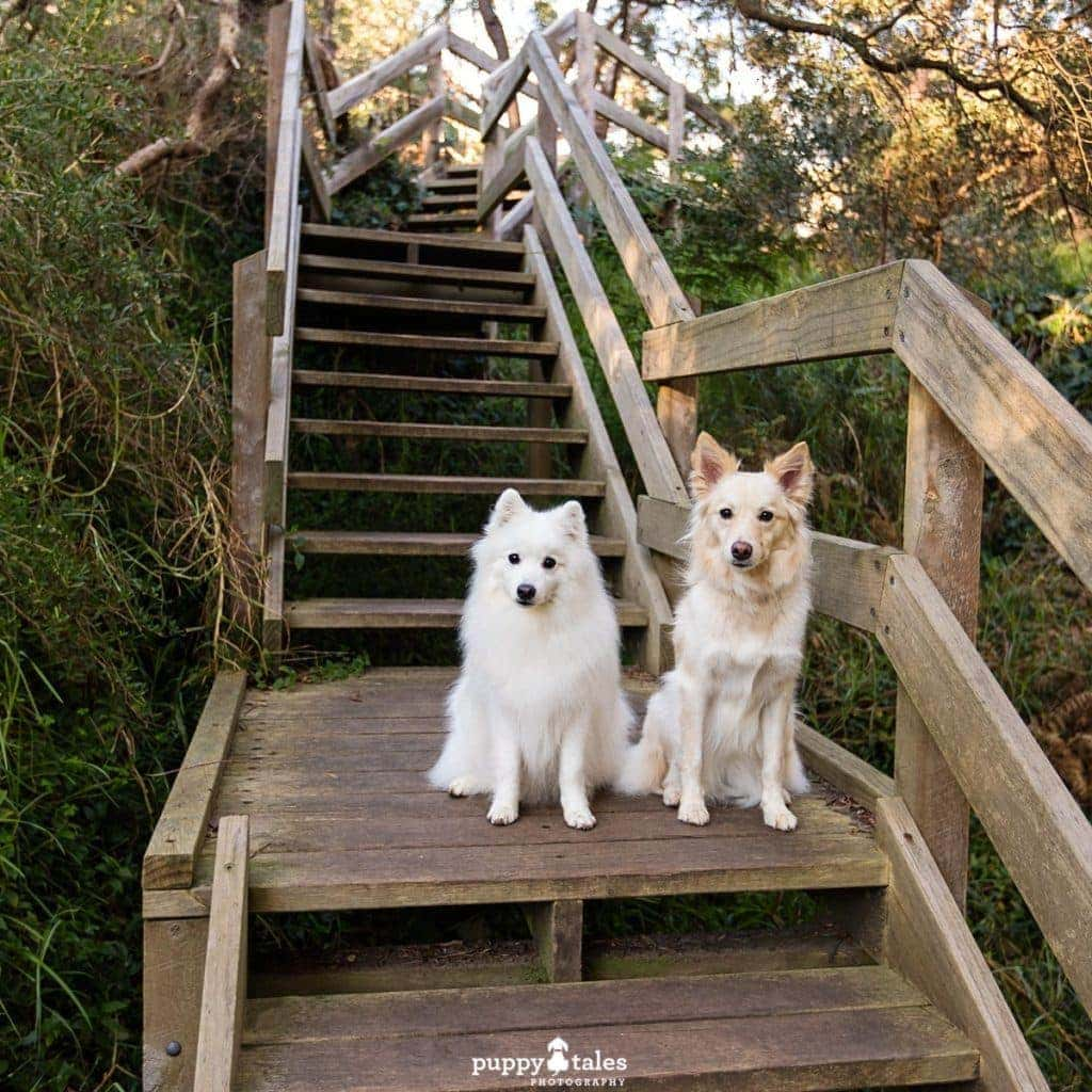 Steps at Sweetwater Creek Nature Reserve Dog Friendly Walk