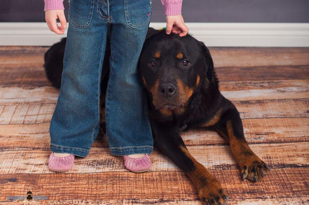 Rottweiler and girl's legs.