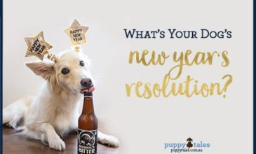 Dogs New Year's Resolutions Generator for your Dog!