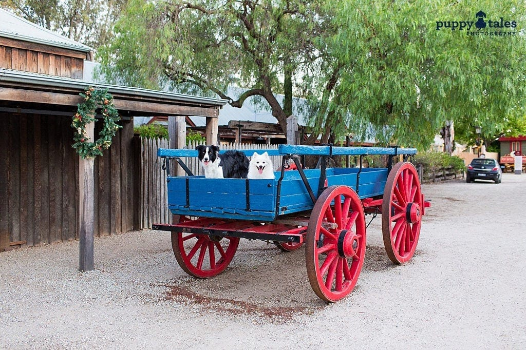 Dog Friendly Destinations ~ Echuca