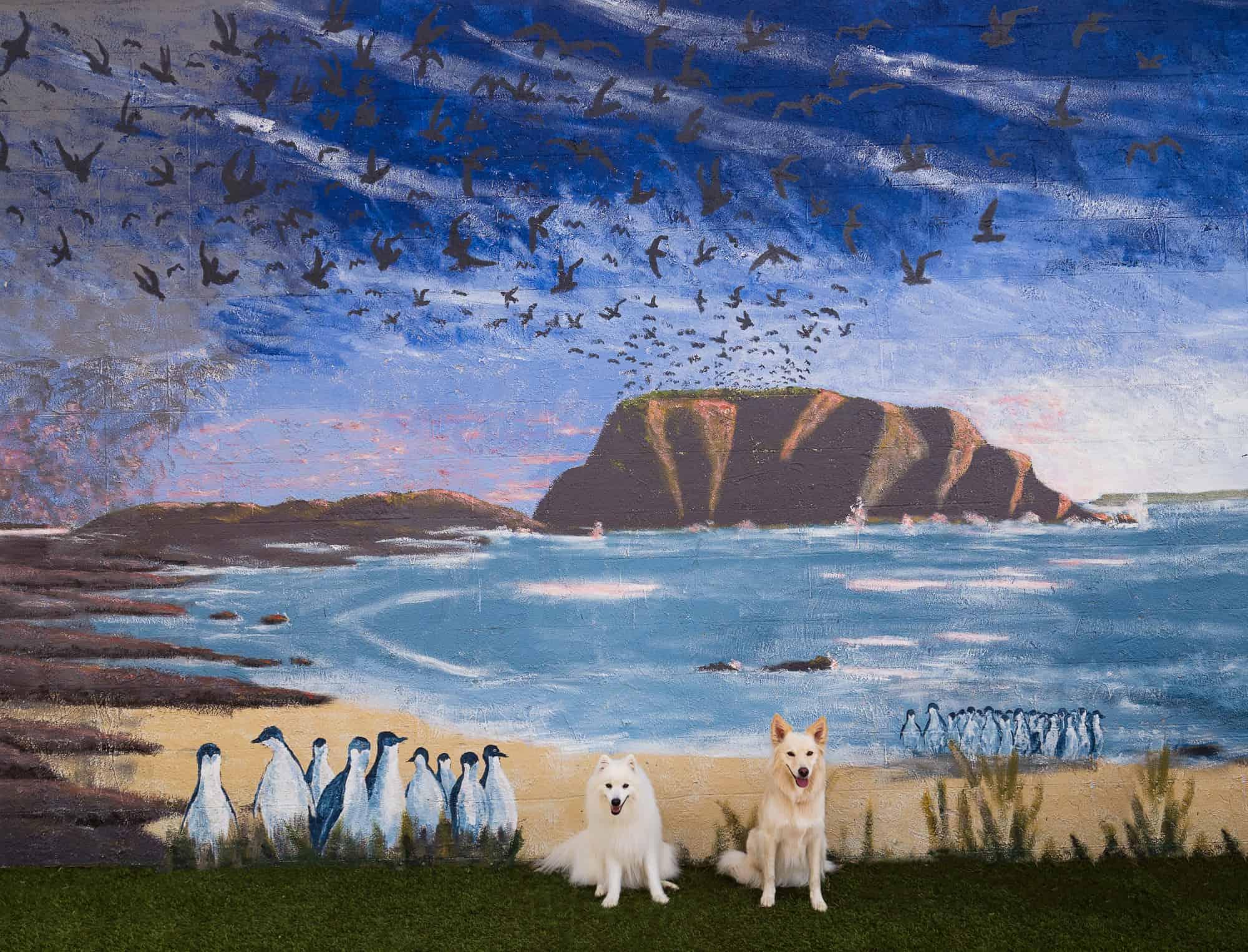 Do It Yourself Home Design: Phillip Island ~ Dog Friendly Destination
