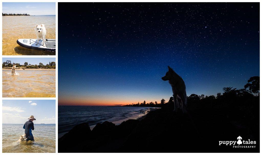 Dog Friendly Beaches Phillip Island