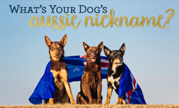 For Australia Day this year we're asking...What's your dog's Aussie nickname!