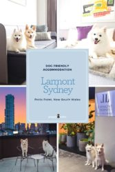 Looking for Dog Friendly Accommodation in Sydney? Try the luxurious Larmont by Lancemore in Potts Point.