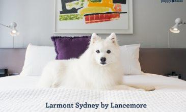 Larmont Sydney, Dog Friendly Hotel Accommodation in Sydney, Australia.
