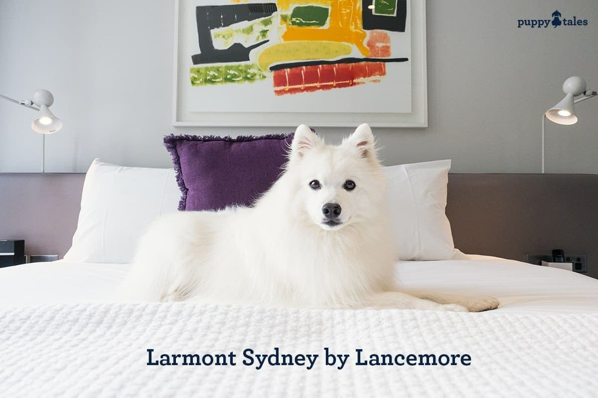 Larmont Sydney, Dog Friendly Hotel Accommodation in Sydney, Australia.