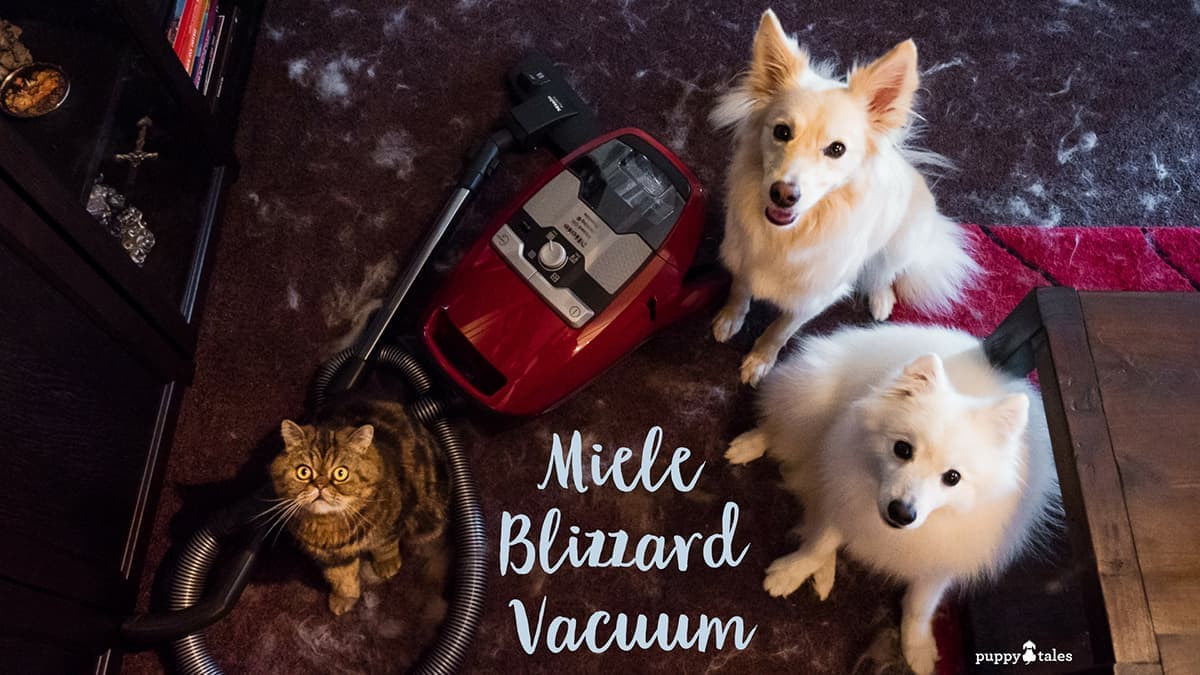 Miele Vacuum Review Coming Clean about the Miele Blizzard Vacuum