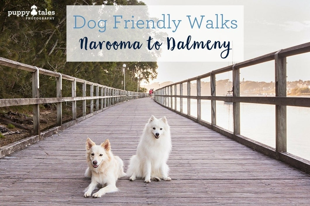 Narooma to Dalmeny title Dog Friendly Walk