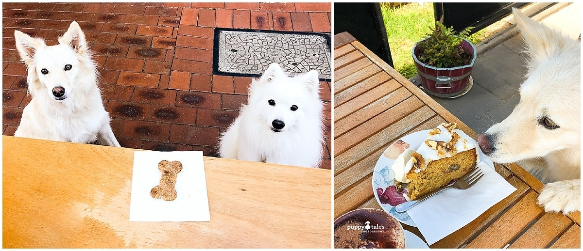 Japanese Spitz Border Collie Keiko Summer Treats