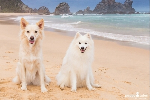 Dog Friendly Destination Bermagui