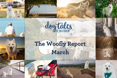 Dog Tales of Australia Monthly Wrap Up Post