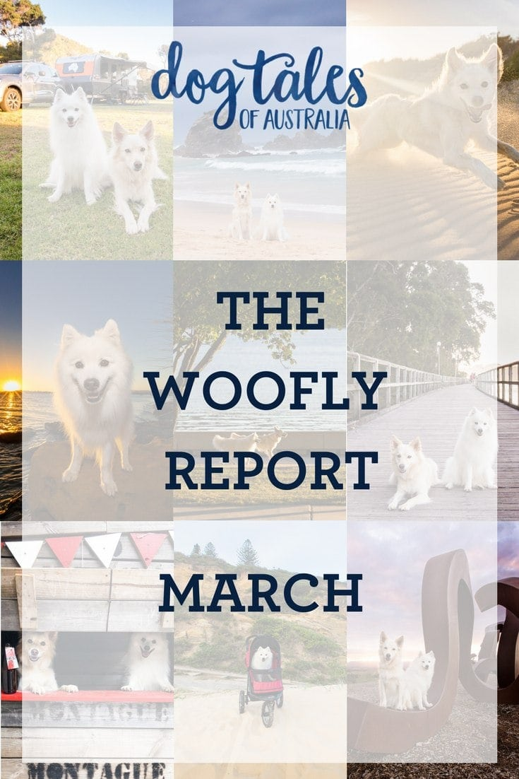 Dog Tales of Australia - The Woofly Report!