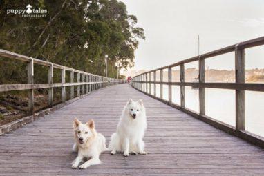 Narooma to Dalmeny Walk Dog Friendly Walk