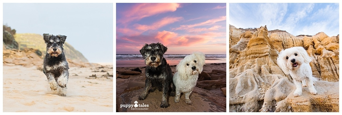 Dog Tales of Australia Photography Session with Lexi & Zach in Lakes Entrance, VIC