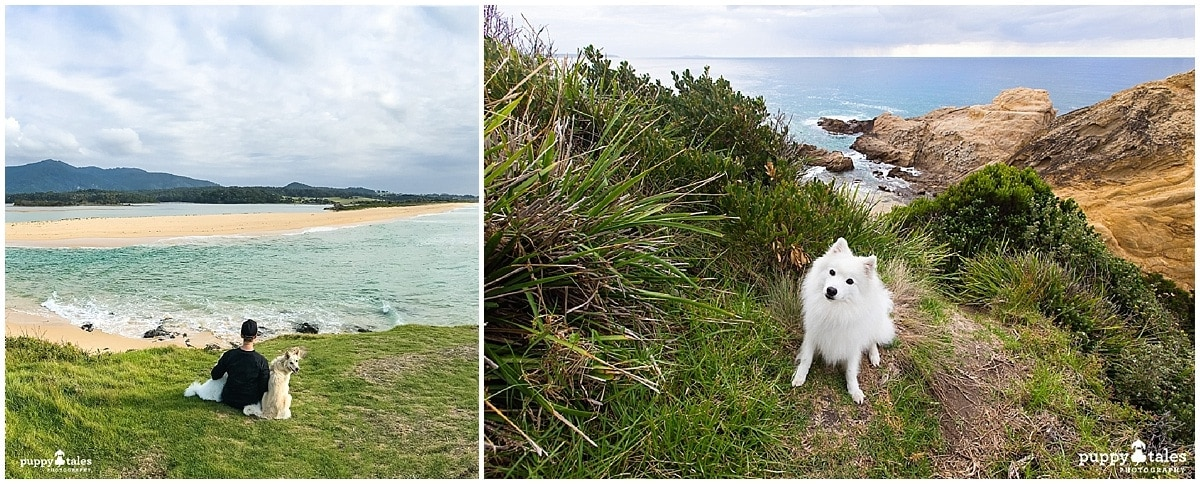 Dog Friendly Walks Bermagui