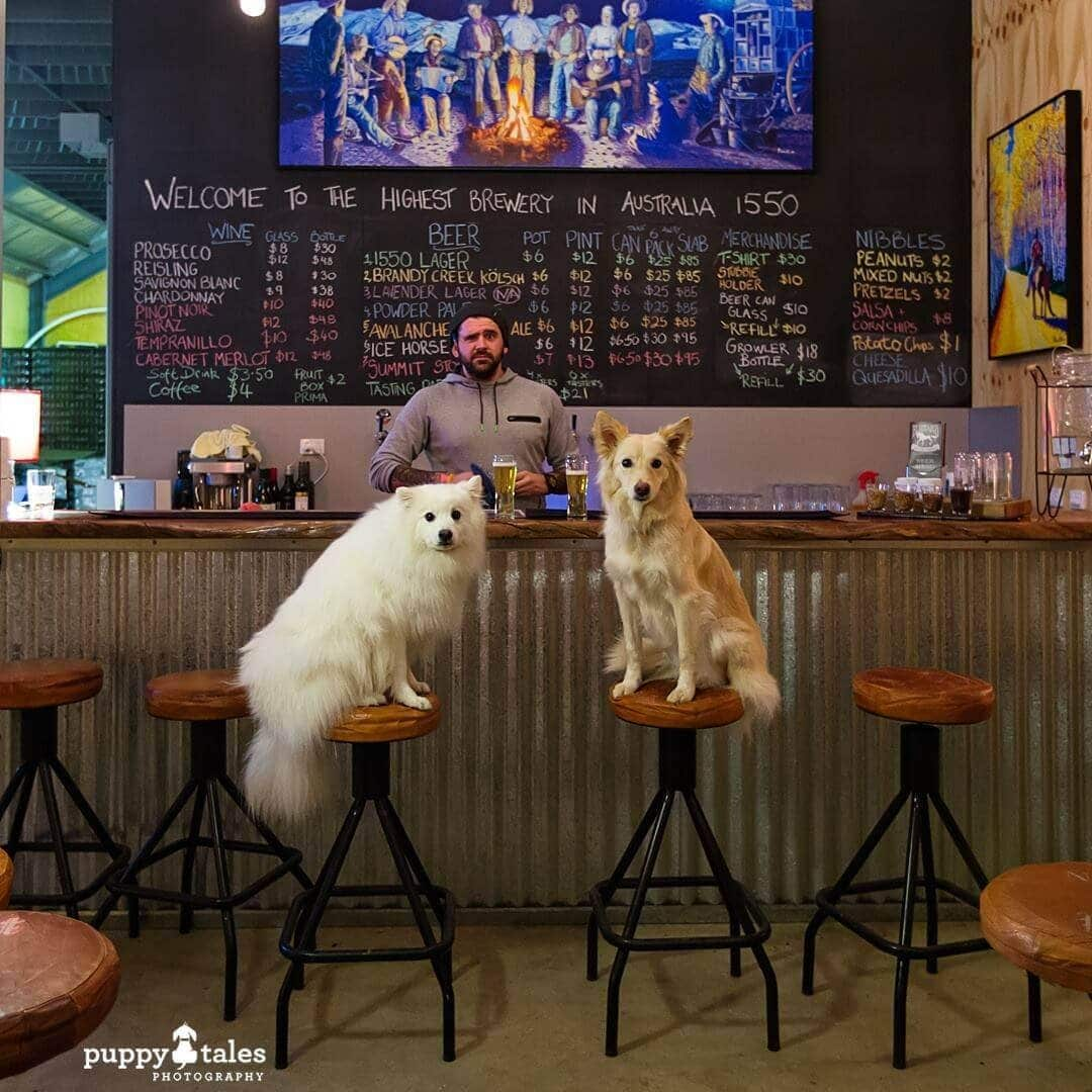 Pawsitive Travel With Dogs Dogs About Town Brewery Visit