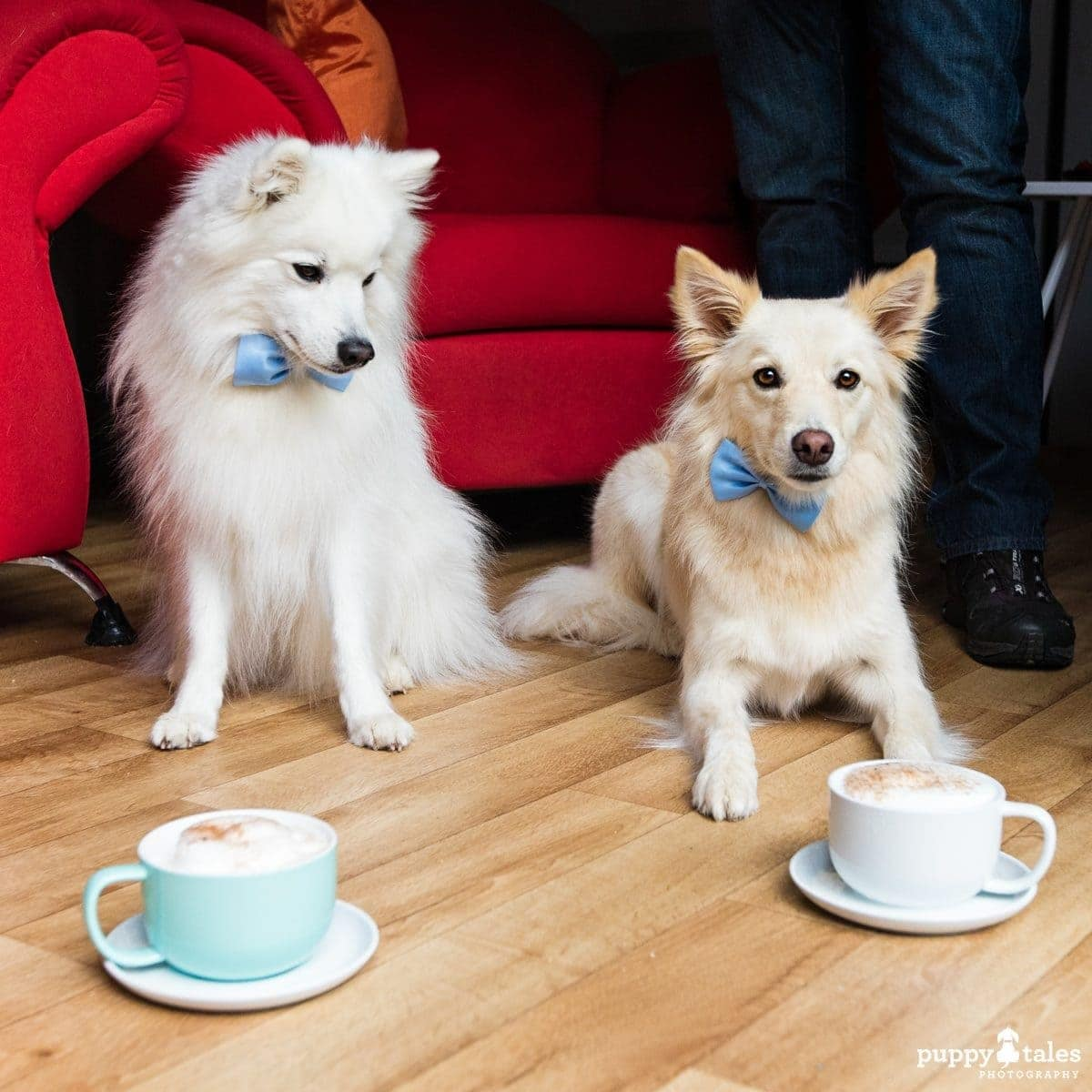 Pawsitive Travel With Dogs Gourmet Travel