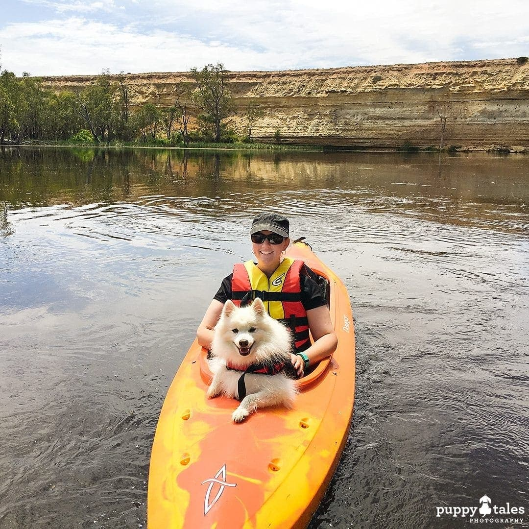 Pawsitive Travel With Dogs Canoeing Water Lovers